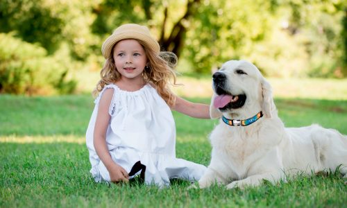 A cute blonde girl with blue eyes with a white big rottweiler dog in a summer sunny park. The concept of friendship