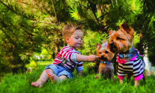 Baby boy and two yorkshire terrier outdoors